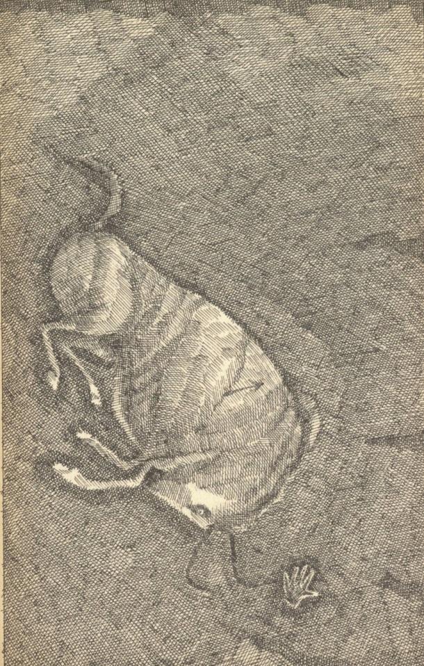 stonebook6