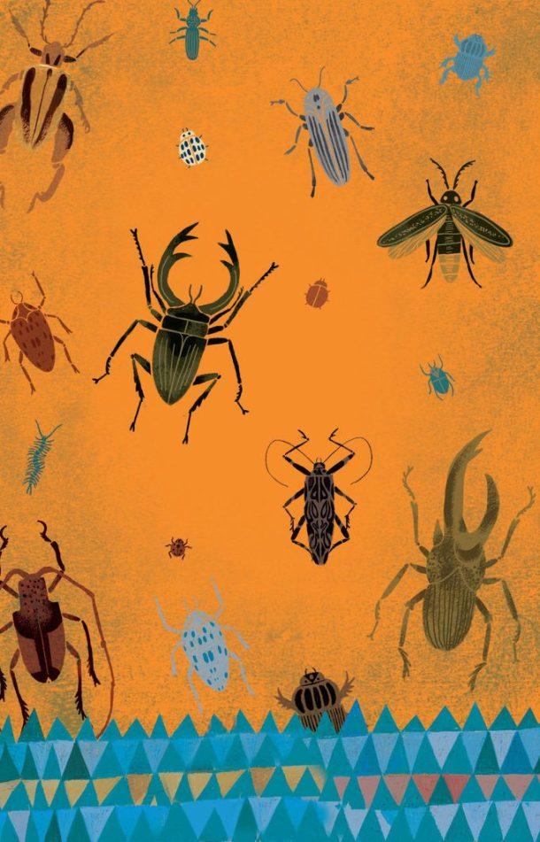 el_chico_beetles
